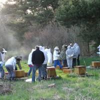Eftersyn af bifamilierne med rigelig røg!